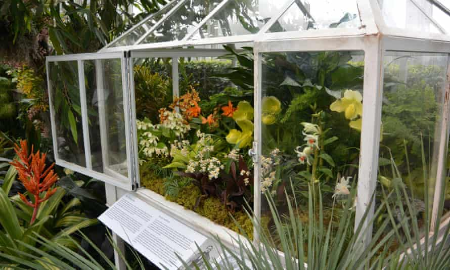 Wardian case full of orchids at the 2016 New York Botanic gardens orchid show