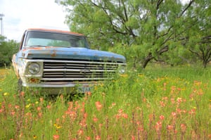 Flowers around a rusting Ford pickup truck in a field near Kingsland. All Photographs: Simon Leigh for the Guardian