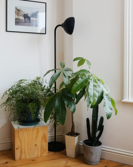 Collection of plants in corner of a room