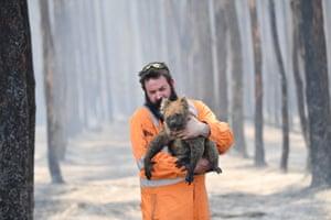 Adelaide wildlife rescuer Simon Adamczyk holds a koala he saved from a burning forest near Cape Borda on Kangaroo Island.