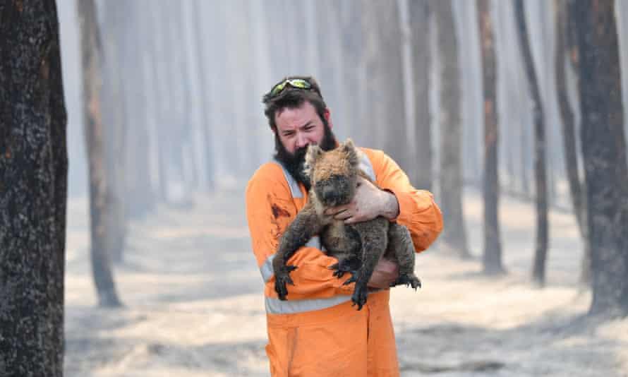 A firefighter carries a koala injured during the Kangaroo Island bushfires in January 2020