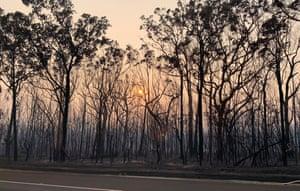 Burnt-out bushland