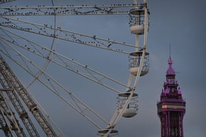 Starlings roost on the big wheel of the central pier in Blackpool, north-west England.