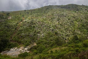 A logged valley on Mount Mulanje, cleared of cedars