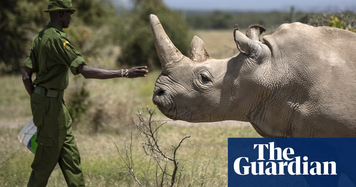 Eldest of world's last two northern white rhinos retired from breeding programme