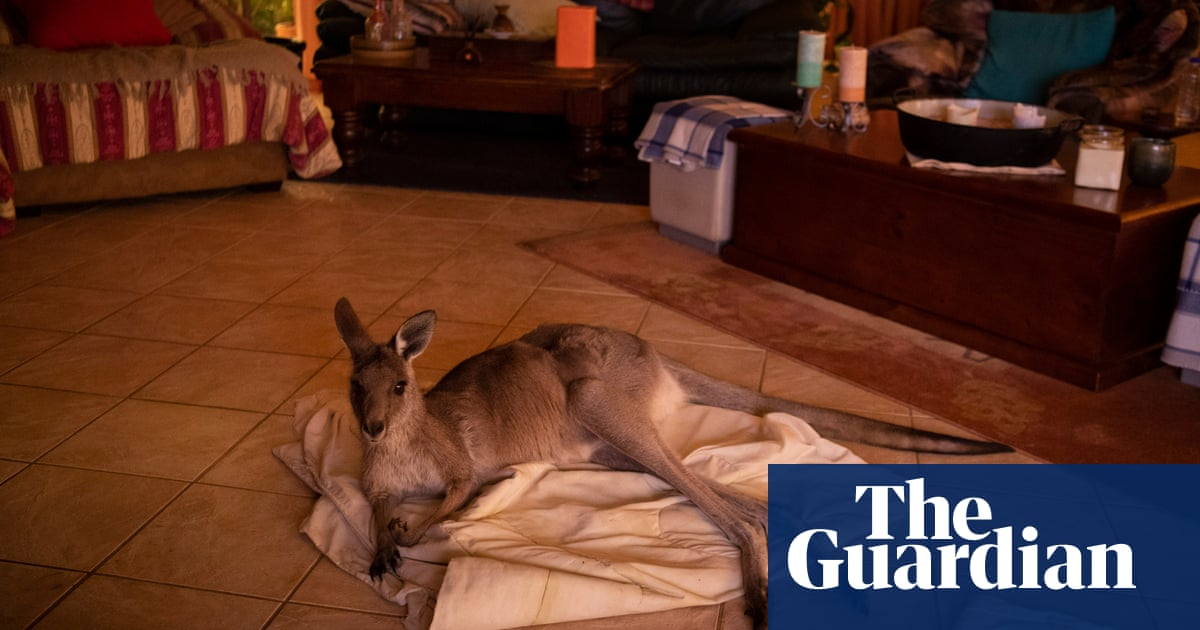 Heartbreaking And Heartwarming Animals Rescued From Australia S Bushfires Devastation Environment The Guardian
