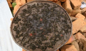 The meal of dried bean leaves with a tomato prepared by 83-year-old Rosa Mastindi in Mbavari - the only crop she has been able to grow