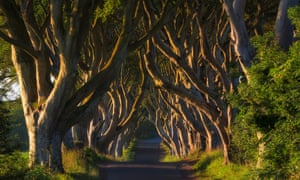 Beech tree avenue, The Dark Hedges, Ballymoney, County Antrim, Northern Ireland