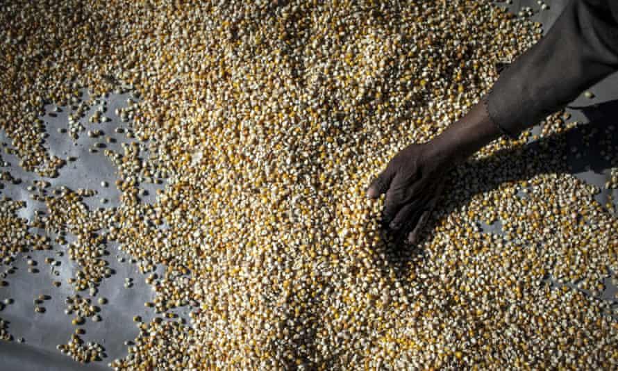 grain, lesotho, food security