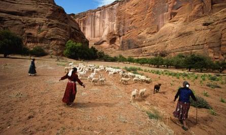 Native American Navajo women herding sheep in Arizona.