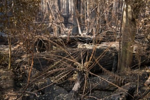 The fire that ignited two weeks ago near Riveaux Road enveloped the airwalk and continued its path of destruction to communities in the Huon Valley