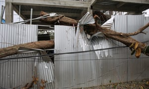 A fallen tree pierces corrugated iron in the Philippines