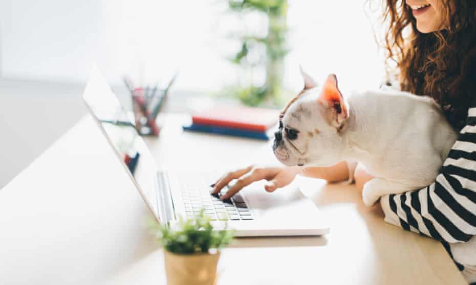 Woman working at a laptop with her dog on her knee