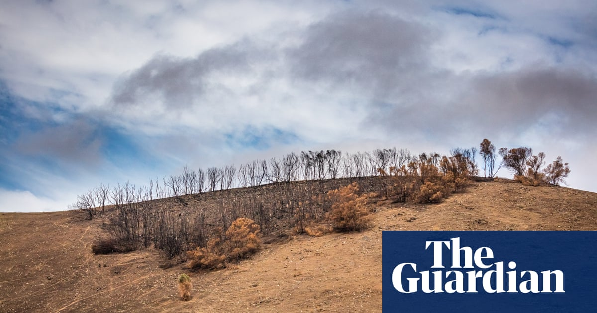 'Shell shock': Kangaroo Island struggles to recover amid bushfire grief and Covid-19 – The Guardian