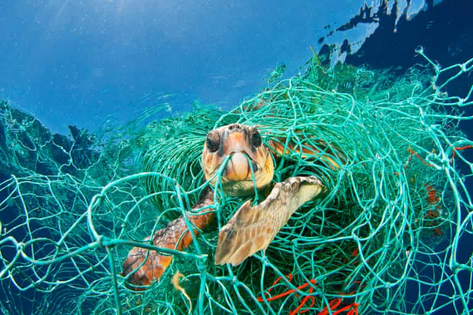 A loggerhead turtle trapped in an abandoned net