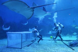Divers taking part in an underwater soccer demonstration at the Haichang Whale Shark Ocean Park in Yantai, to mark the Football World Cup, in China's eastern Shandong province.