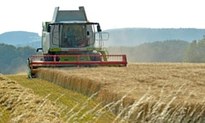 a combine harvester traverses a field of wheat