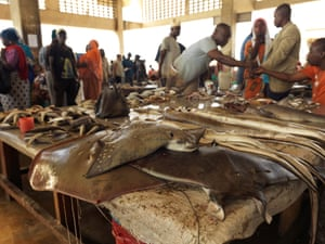 Skate and Rays lay on a table ready to be sold at Kivukoni fish market, where fish are in high demand as supply shrinks.