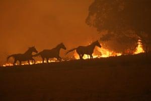 Still running (the horses are safe)