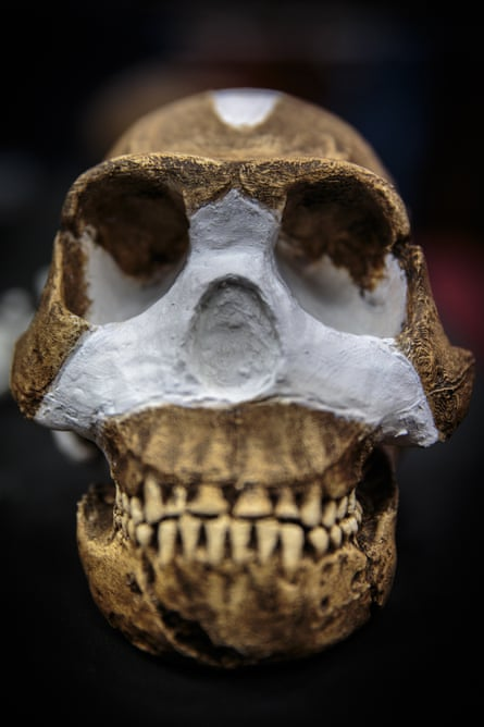 A cast of the skull of Homo naledi, in the vault of the University of the Witwatersrand in Johannesburg, South Africa.