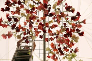 Amaryllis are suspended from a ceiling