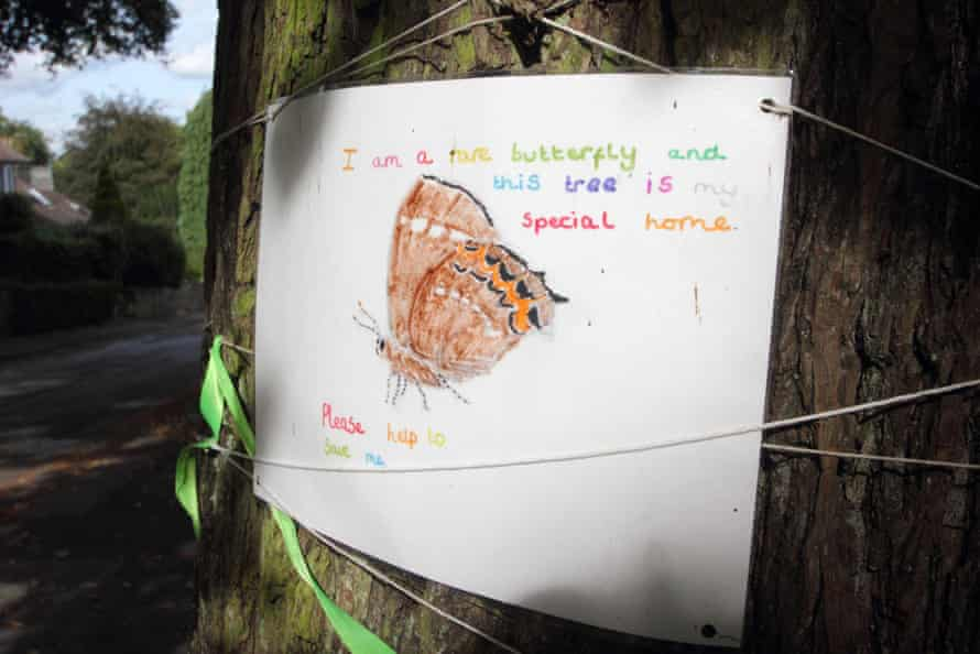 A poster on the trunk of a mature elm tree, featuring a white-letter hairstreak butterfly, in Nether Edge, Sheffield, UK, alerts passers-by that the tree hosts rare butterflies.