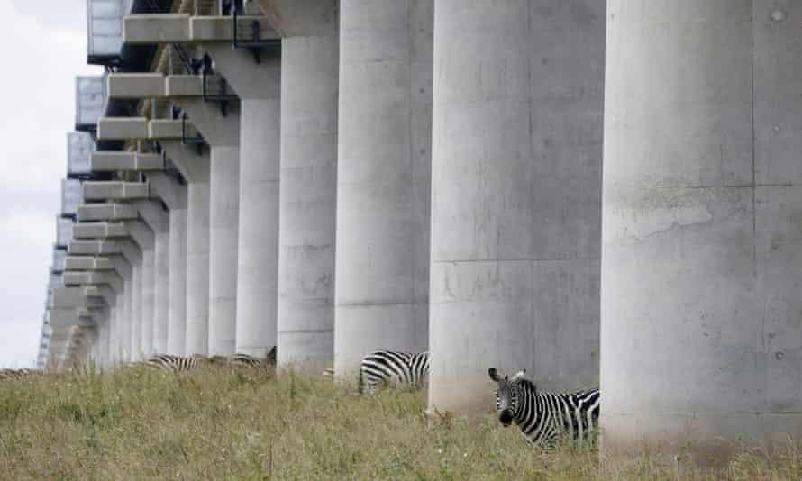 Zebras graze under a bridge of the Mombasa–Nairobi Standard Gauge Railway inside Nairobi national park.