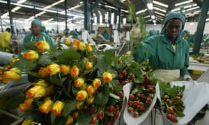 Workers pack roses at Oserian farm in Naivasha, north-west of Nairobi.