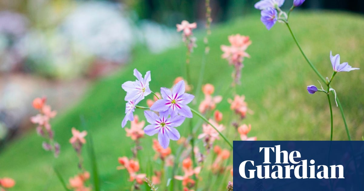 Uk Set For Magnificent But Brief Burst Of Spring Flowers Experts