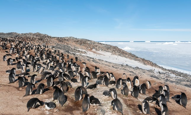 POLL: Should Australia be allowed to construct a new airport and runway in Antarctica?