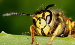 In the UK, there are between two and nine deaths from anaphylaxis caused by bee and wasp venom.