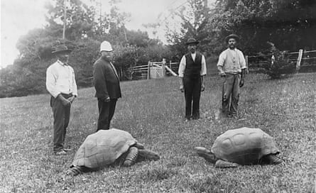 Two giant tortoises photographed in the grounds of Government House, St Helena