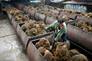 A worker at a palm oil plantation in the southern Philippines handles newly harvested fruits