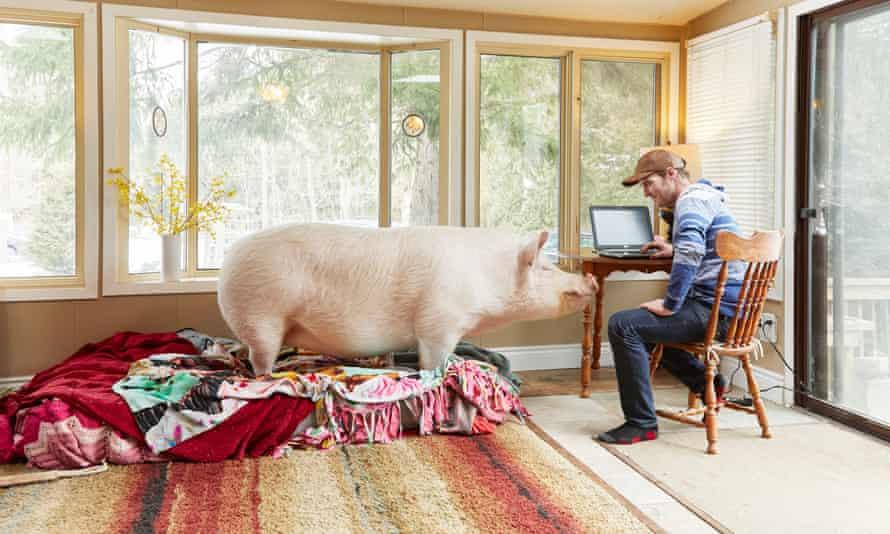 Steve Jenkins and Esther the Wonder Pig