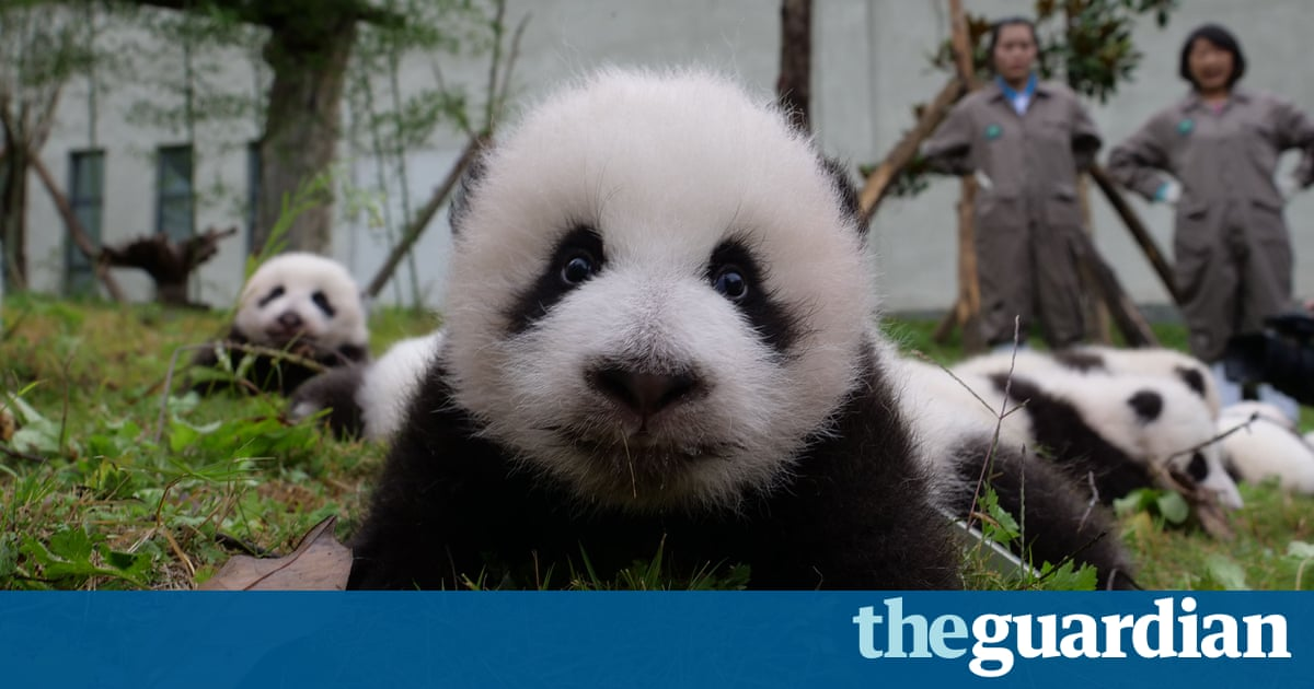 Panda cubs and a white elephant: Friday's fantastic photographs