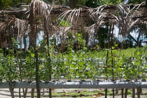 Experimental hydroponic vegetable growing on the island of Abaiang.