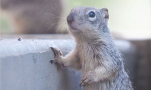 A squirrel at Squirrel Creek Wildlife Rescue. The Colorado Parks and Wildlife government agency has filed 21 criminal charges against the center.