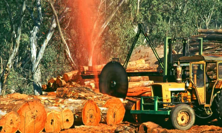 River red gum tree logging operation
