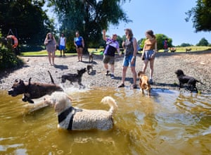 Dogs cool off in the dog pond at Hampstead Heath