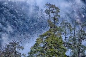 Falling leaves are blue by Kallol Mukherjee in North Sikkim, India