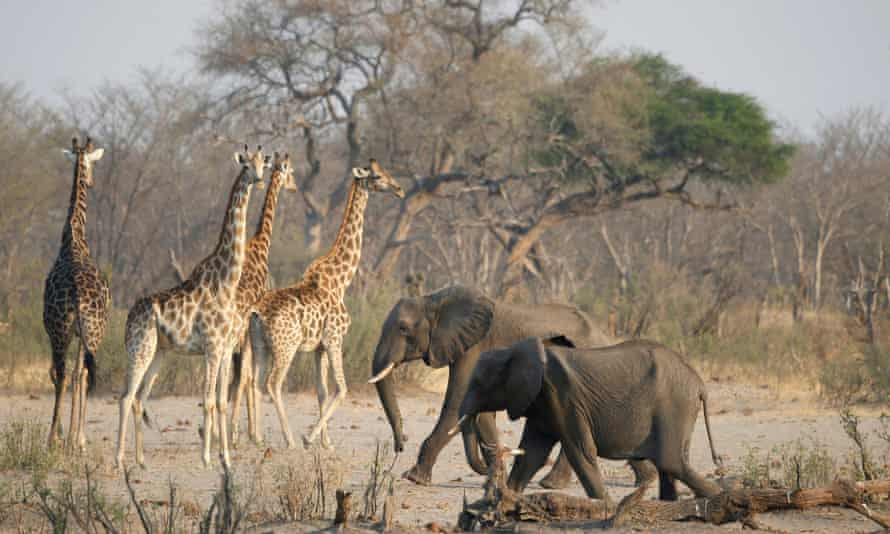 Chinese mining firms in Zimbabwe pose threat to endangered species, say experts