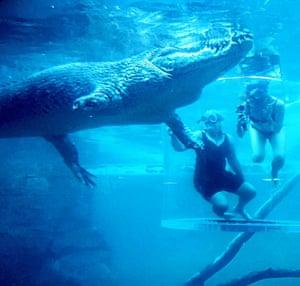 Chopper circles the 'cage of death' at Crocosaurus Cove