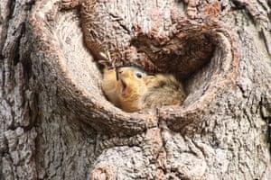 Who would like a peanut?