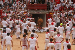 A wild cow enters the bullring