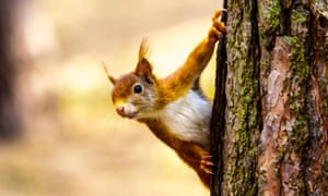 Red squirrels have been introduced on Caldey Island.