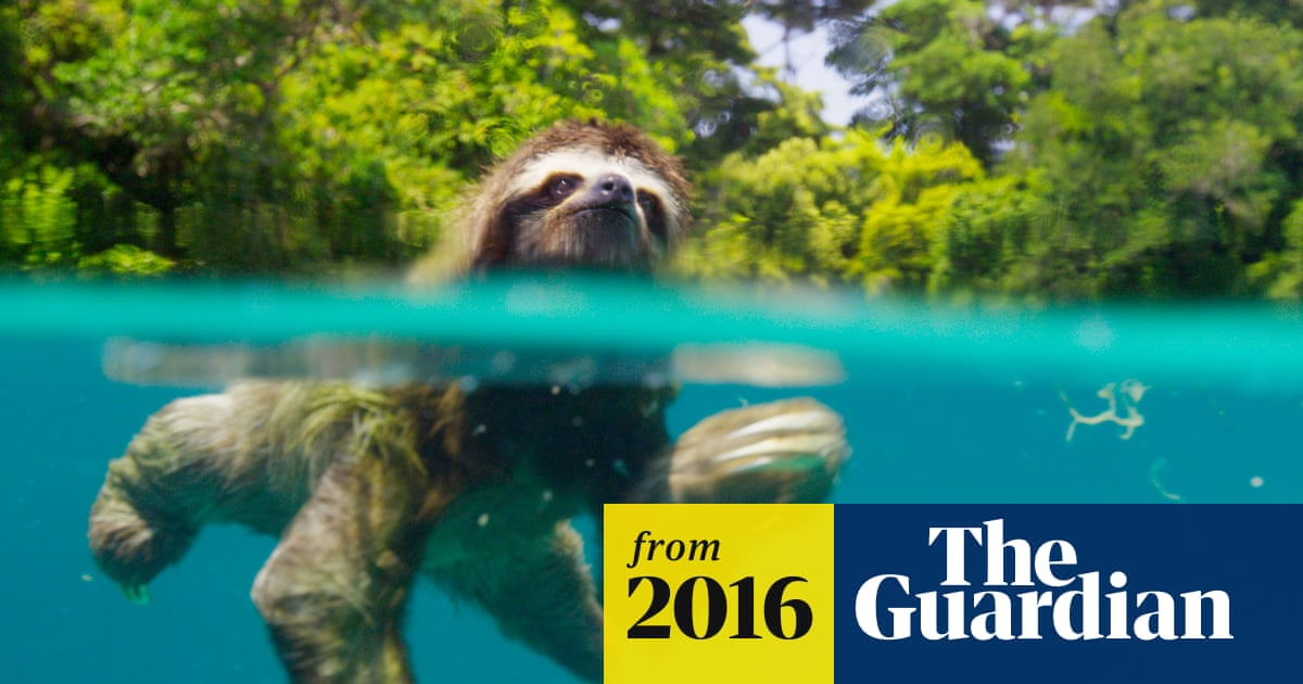 planet earth 2 ultra hd download