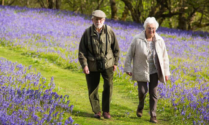An older couple walking through bluebells above Austwick in the Yorkshire Dales, UK.