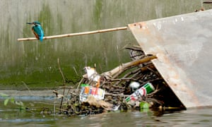 A kingfisher stands on discarded litter in Deptford Creek