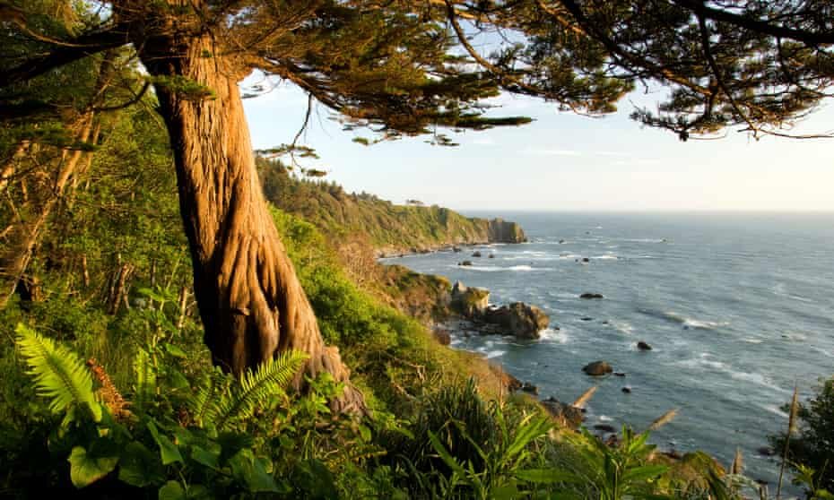trees and coast