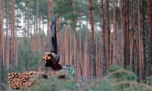 Pine logs are piled up on the site of Tesla's new factory, in Grünheide near Berlin.